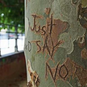 just say no carved into a tree